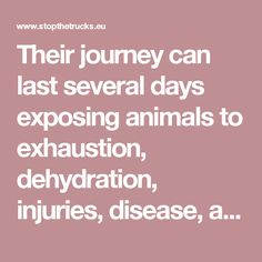 Their journey can last several days exposing animals to exhaustion, dehydration, injuries, disease, and even death. Not even the old, the weak, the newly born are spared. Worn-out animals, weakened by years of production in confinement, with brittle or broken bones. Young calves unweaned, forced to stand, for hours and days, in crowded trucks, unfed, unrested.