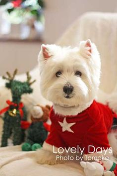 Christmas w/ a white doggie.  & then there's spring & mud - w/ a white doggie .....Enjoy your Christmas...