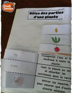 Cahier Interactif: Le cycle de vie des plantes // Interactive Notebook Science