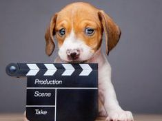 TOP #129: Making The Dog Doc Film featuring Cindy Meehl Dog Whisperer Tips, Dog Warts, Kill Fleas On Dogs, Home Remedies For Fleas, Killing Fleas, Meds For Dogs, Yorkie Haircuts, Cushing Disease, Deaf Dog