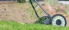 Lawn Care, Garden Maintenance, Mowing, Grass Cutting