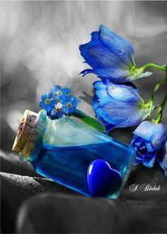 Kék virág.