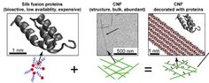 Making composite isotropic films of CNF (90%) and silk (10%)