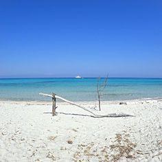 Nous pouvons vous amener au #paradis cet été  #Aircorsica #Corse #mediterranee #mer #eauturquoise #sableblanc #saleccia #plage  #agriates #paradis #nature #sauvage #siteremarquble #bonheur  #famille