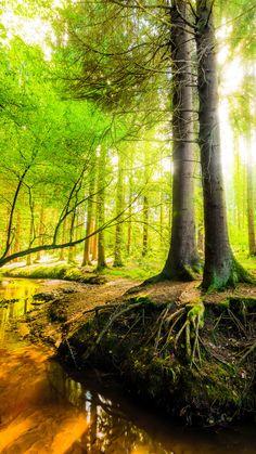 Königsforst - Wald mit Bach und Sonne