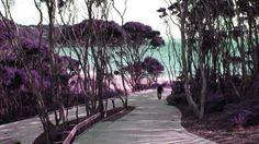Warkworth | Gateway to Matakana Coast & Country | Matakana Coast & Country. Official Website for Matakana, Warkworth, North Auckland Region Auckland, Sidewalk, Coast, Website, Country, Places, Rural Area, Side Walkway, Walkway