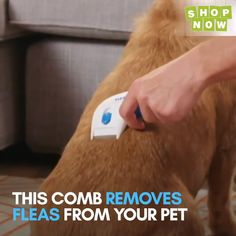Electric Flea Cleaner Comb – Pets and Supplies Dog Health Care, Cool Inventions, Useful Life Hacks, Dog Accessories, Dog Supplies, Dog Care, Cool Gadgets, Fleas, Dog Toys