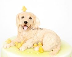 Golden retriever and chickens cake Dog Cookies, Cupcake Cookies, Cupcakes, Bolo Fashionista, Puppy Dog Cakes, Fondant Dog, Biscuit, Chicken Cake, Teen Cakes