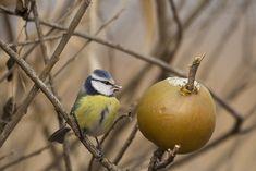 Téli madáretetés | Magyar Madártani és Természetvédelmi Egyesület Devon, Marvel, Birds, Animals, Animales, Animaux, Bird, Animal, Animais