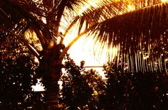 My picture I took of a palm tree Palm Trees, Of My Life, Pictures, Photos, Palms, Resim, Clip Art