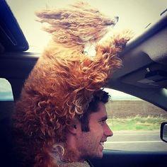Cani felicissimi mentre viaggiano in macchina guardando il mondo dal finestrino