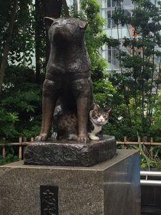 渋谷ハチ公に猫おったww