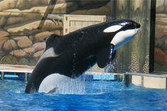 Sea World at both Florida and San Diego:)  YeeHaw:)  good times:) love me some animals:)
