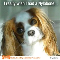 """Share a photo of your dog's """"Nylabone"""" face…#dogs #pets"""