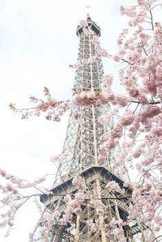 Paris Photography, April in Paris, Pretty in Pink, Paris in the Springtime, Pink Cherry Blossoms Eiffel Tower, Paris Home Decor by rebeccaplotnick on Etsy