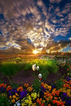 ~~On Earth as it is In Heaven | sunset flower fields, Caledonia, Wisconsin | by Phil Koch~~