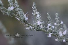 purity, white, flowers, wild flower, photography