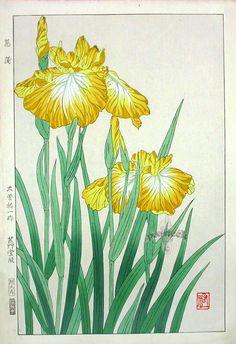 Golden Iris-Shodo Kawarazaki