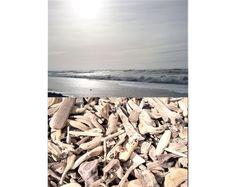 Little Driftwood pieces, to A HUGE supply of QUALITY Driftwood pieces, natural driftwood, mobile pieces – Ocean Trash Driftwood For Sale, Driftwood Mobile, Driftwood Art, Marine Debris, Solar Light Crafts, Trash Art, Ocean Shores, Beach Wood, Wooden Ship