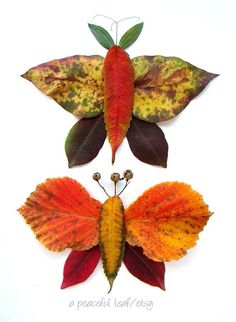 Leaf butterfly photo 8x10 Autumn leaf arrangement by APeacefulLeaf, $25.00