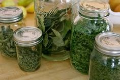 Growing your own medicinal herbs
