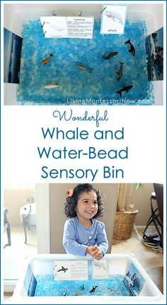 "This ""W is for wonderful whale and water-bead sensory bin,"" is part of the A-Z of Animals Series. Post includes links to free printables & a YouTube video, too."