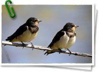 El Día Internacional de las Aves se celebra en todo el mundo por iniciativa de una organización llamada BirdLife Internacional, que promueve la conservación de todas las aves que habitan el planeta. Esta organización es una red de ONGs que tiene como objetivo la conservación de todas estas especies; así como la preservación de sus diferentes hábitats. + info: http://www.barrameda.com.ar/dp
