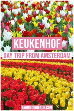 Wondering what the best day trips from Amsterdam are? Look no further than this post, a comprehensive list of traveler's favorite day trips from Amsterdam! Day Trips From Amsterdam, Amsterdam Travel, Amsterdam Things To Do In, Visit Amsterdam, Europe Travel Guide, Travel Destinations, Travel Guides, Travel Abroad, Excursion