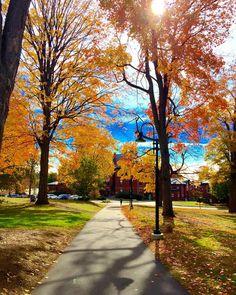 Fall at Mount Holyoke  #mountholyoke #mountholyokecollege #mountholyokeforevershallbe @mtholyoke @mhcalums