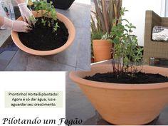 Como Montar uma Horta em Casa - Pilotando um Fogão
