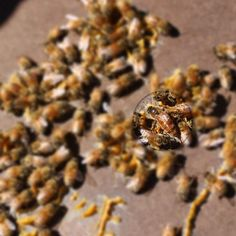 The Queen Bee - the most important bee in the hive! Royal Jelly, Queen Bees, Nature, Food, Naturaleza, Hoods, Meals, Outdoors, Natural