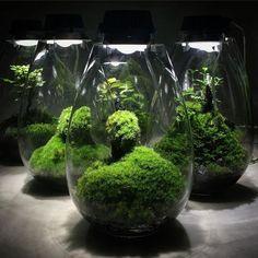 Awesome Bonsai Terrarium On The Jars 73
