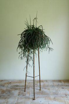 【明るい部屋】ポートフォリオ i would like to make this plant stand for a string of pearls plant