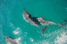 Golfinhos rotadores  -  Parque Nacional Marinho de Fernando de Noronha