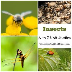 Insects Unit Study Resources | thissweetlifeofmine.com