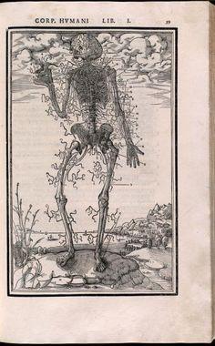 Nerve man    Descriptive Title:Nerves of the body, with skeleton.  Artist:La Rivière, Etienne de  Technique:woodcut  Source:   De dissectione partium corporis humani / 1545