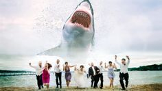 Shark attacks the bridal party This would make the best wedding story ever. #sharkattack