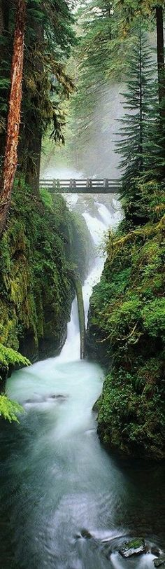 Olympic National Park: Humptulips, Washington: https://www.facebook.com/countryspaces/photos/a.389333227901309.1073741838.383489958485636/604473379720625/?type=3