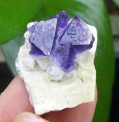 Cute-Octahedron-Purple-phantom-Fluorite-on-Matrix-mineral-specimen-China-1283