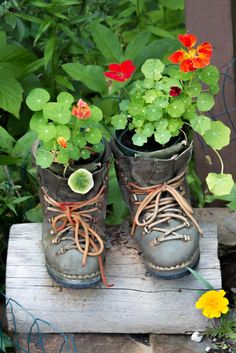 Use boots as planters is by placing your small-sized plant pots inside worn out boots. Seal the pot tightly in by tying the boot laces in order to add more fit