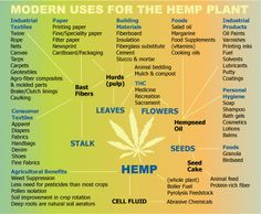 The hemp plant, not marijuana, could immensely, and I mean the literal meaning of that word, bring planet earth back environmentally AND economically. SemillasdeMarihuana.com