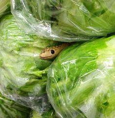 3. Colocar una serpiente de juguete en la sección verduras.