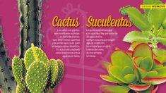 Cactus vs. suculentas. Diferencias de dos tipos de plantas que, en muchas ocasiones, tienden a la confusión. Todo lo que tenés que saber.