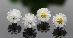 Two Tone Sterling Silver Plain Daisy Earring Studs Wholesale Yiwu China