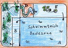 Bild 1: Schwimmteich.