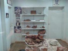 Sala de estudos e separação dos fósseis.