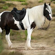 Barefoot Cheyenne Just Adjust fits riders and horses easily!