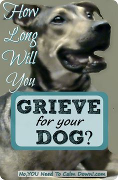 It's a real family loss. How long will you grieve for your dog? Dog Grief, Pet Loss Grief, Loss Of Dog, Losing Your Best Friend, Dog Memorial, Memorial Quotes, Losing A Dog, Calm Down, Dog Care