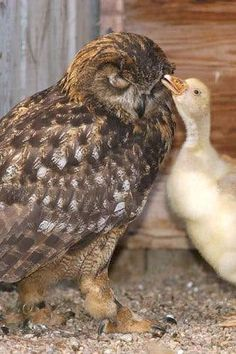 Unexpected, but adorable animal friendships, in pictures.