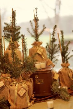 Christmas mini trees vignette
